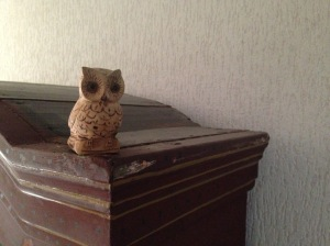 Little Owl at Home